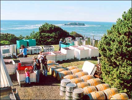 salt air winery